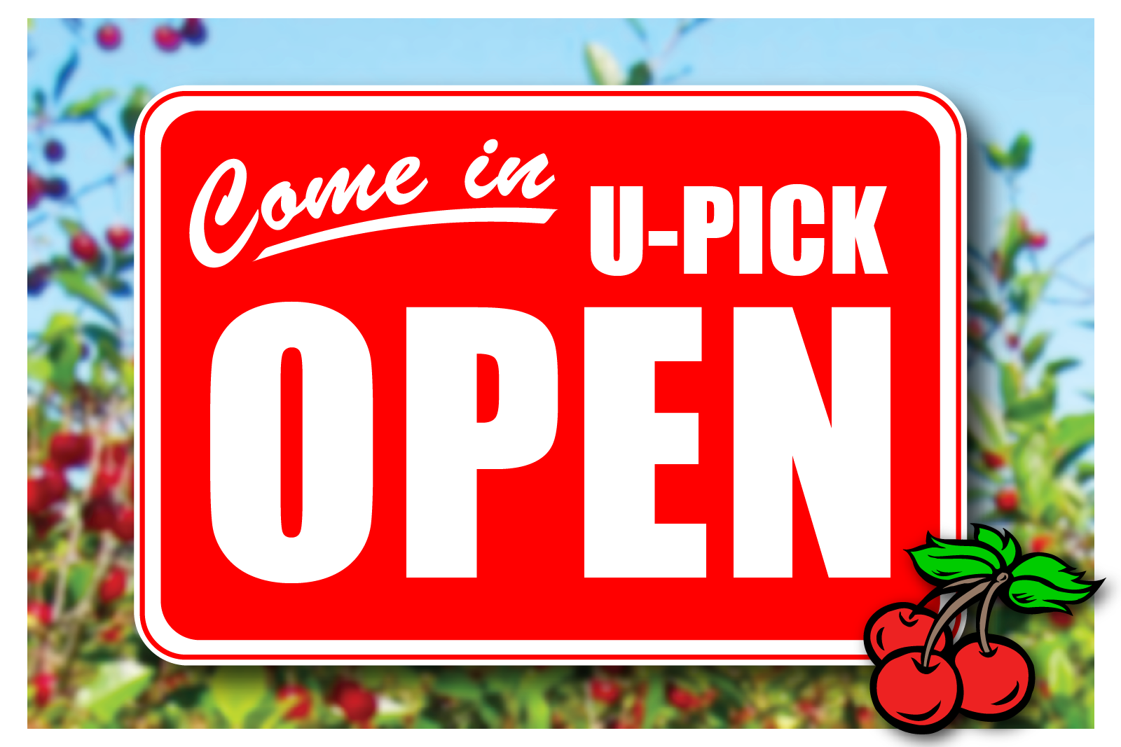 CHERRY U-PICK ORCHARD OPEN